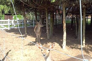 mini_zoo